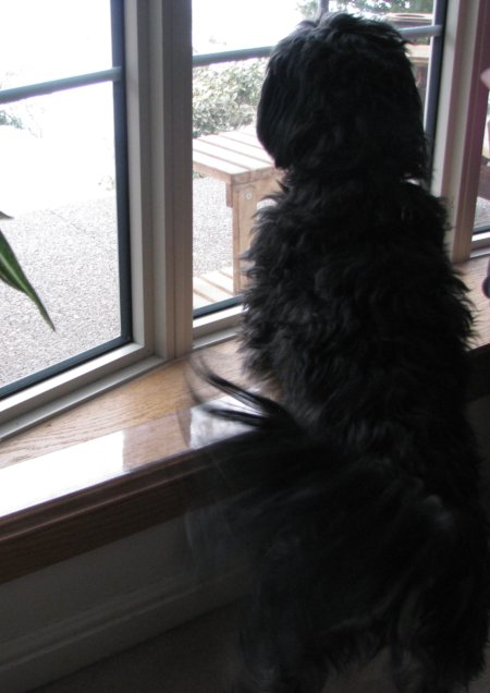 Dogs Scratching Your Sills And Doors ?